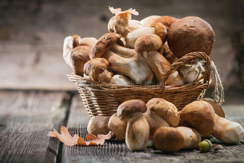 Ceps mushroom. Boletus closeup on wooden table royalty free stock photography