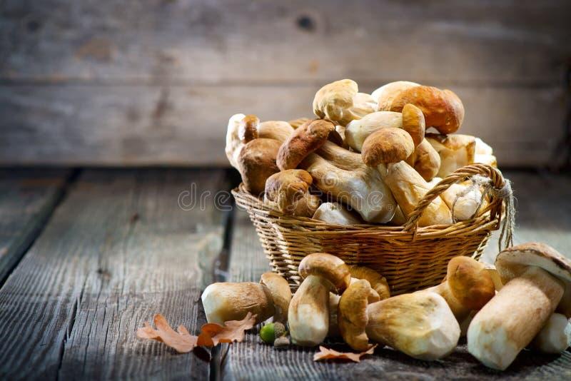 Ceps mushroom. Boletus closeup on wooden table royalty free stock photos