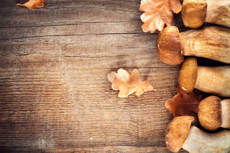 Ceps mushroom. Boletus on wooden rustic table stock photo