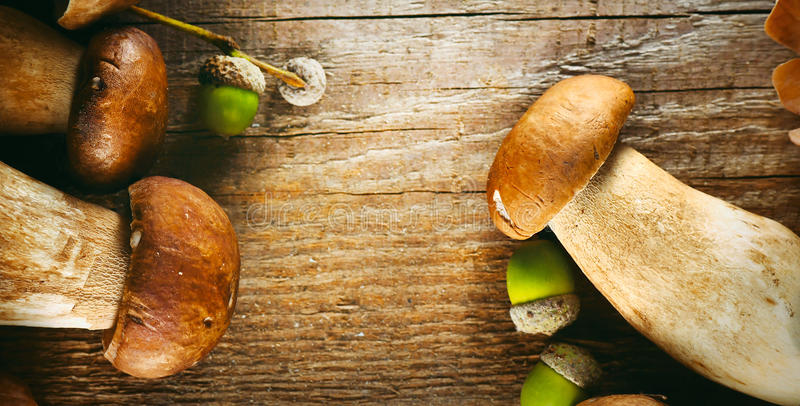 Ceps mushroom. Boletus on wooden rustic table royalty free stock images
