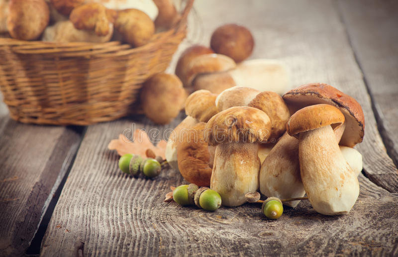Ceps mushroom. Boletus on wooden rustic table royalty free stock image