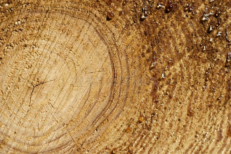Cera na madeira foto de stock royalty free