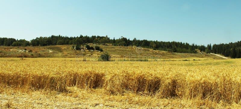 Cerael fält i Israel royaltyfri fotografi