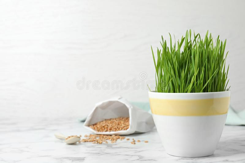 Ceramic cup with fresh wheat grass on table against light background. Space for text stock photos