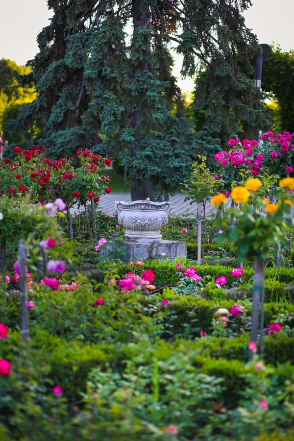 Ceramic flower pot surrounded by roses plants at Park of Roses, Timisoara. Timis County, Romania stock images