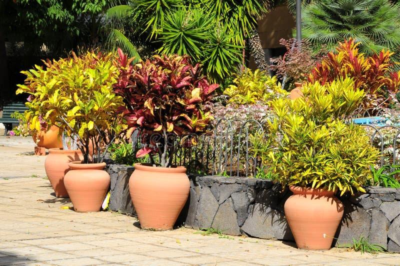 Download Ceramic Garden Pot Stock Photo. Image Of Beautiful, Geranium    35934900