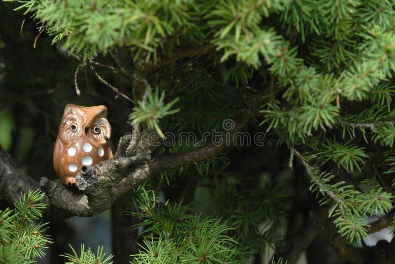 Ceramiczna sowa na gałąź jedlinowy drzewo fotografia stock