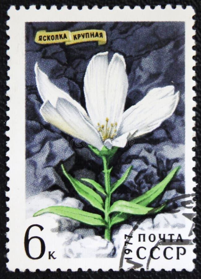 Cerastiumbloem, een reeks van circa 1977 van beelden` Bloemen ` royalty-vrije stock foto