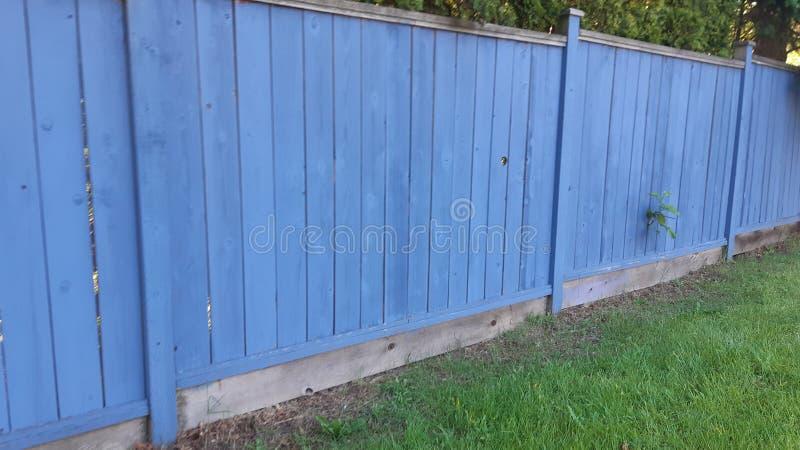 Cerca azul com videira foto de stock royalty free