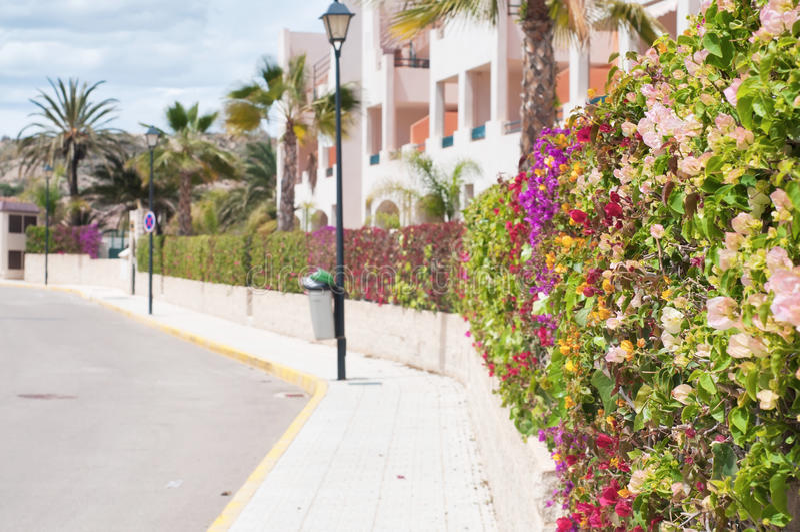 Cerca bonita de flores coloridos fotos de stock royalty free