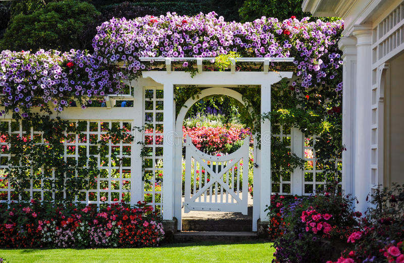 Cerca branca com flores de florescência imagem de stock royalty free