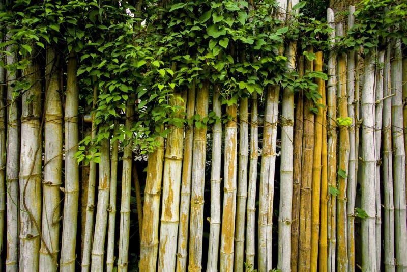 Cerca clásica hermosa del vintage hecha por el bambú y las plantas que suben imagenes de archivo