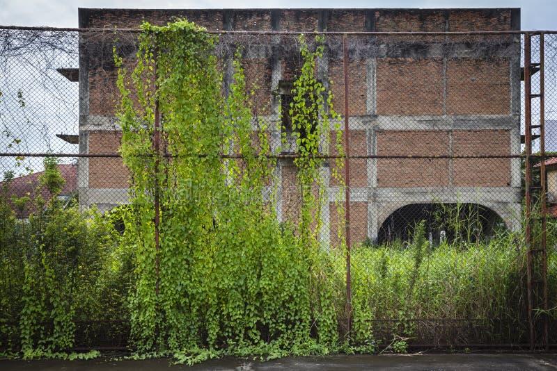 Cerca de aço velha coberta com a hera na frente da casa da região selvagem imagens de stock royalty free