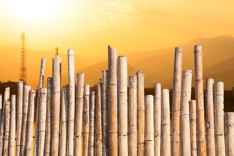 Cerca de bambú hermosa con puesta del sol en brumoso con las líneas de electricidad imagenes de archivo