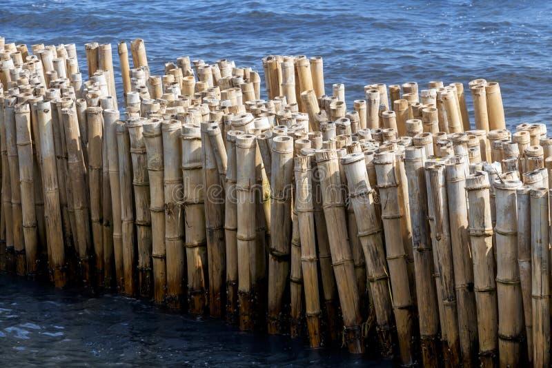 A cerca de bambu é um quebra-mar para proteger a terra e o manguezal da erosão de ondas e da tempestade no mar Diílico de tranqui imagem de stock royalty free