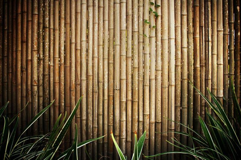 Cerca de bambu fotos de stock