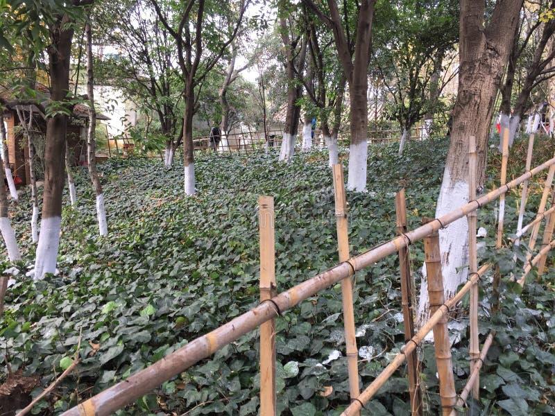 Cerca de bambu em um parque chinês imagens de stock