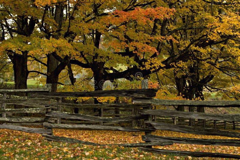 Cerca de carril partido y árboles del otoño fotografía de archivo