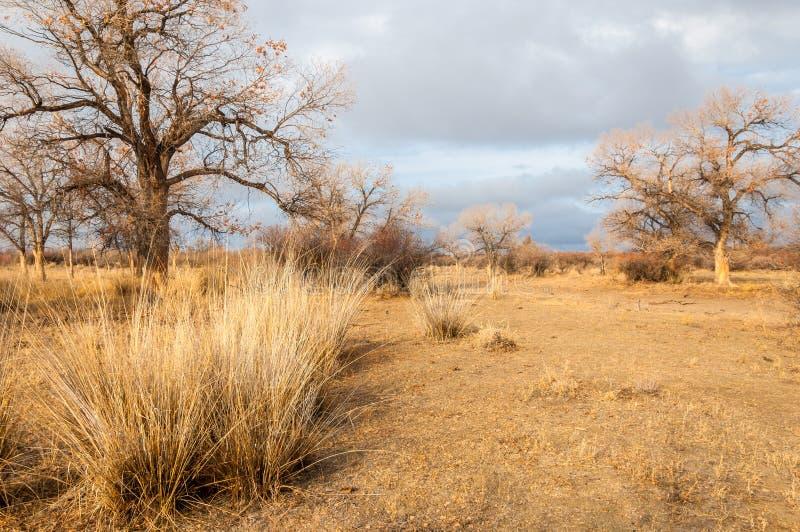 Cerca de desierto desierto estepa foto de archivo imagen de camino caliente 44097798 - Mas l estepa agullana ...