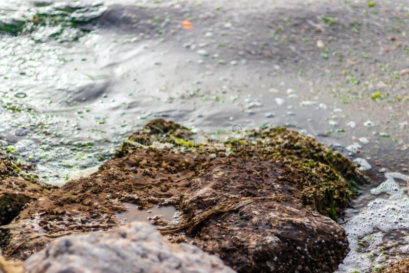 Cerca de disparar a grandes piedras sólidas cerca del mar con musgo sobre él - en el mar hay pequeñas algas ahí fotos de archivo