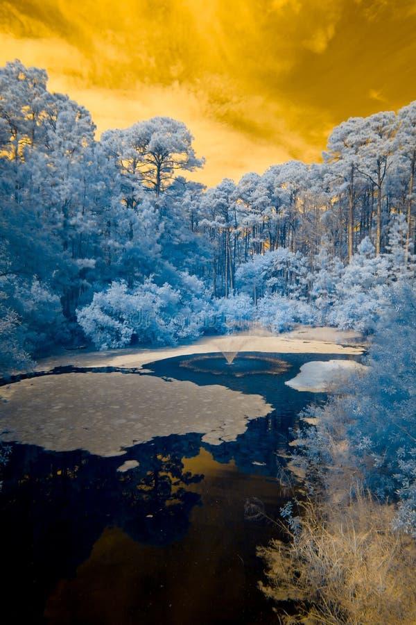 Vista infrarroja del bosque y del agua imágenes de archivo libres de regalías