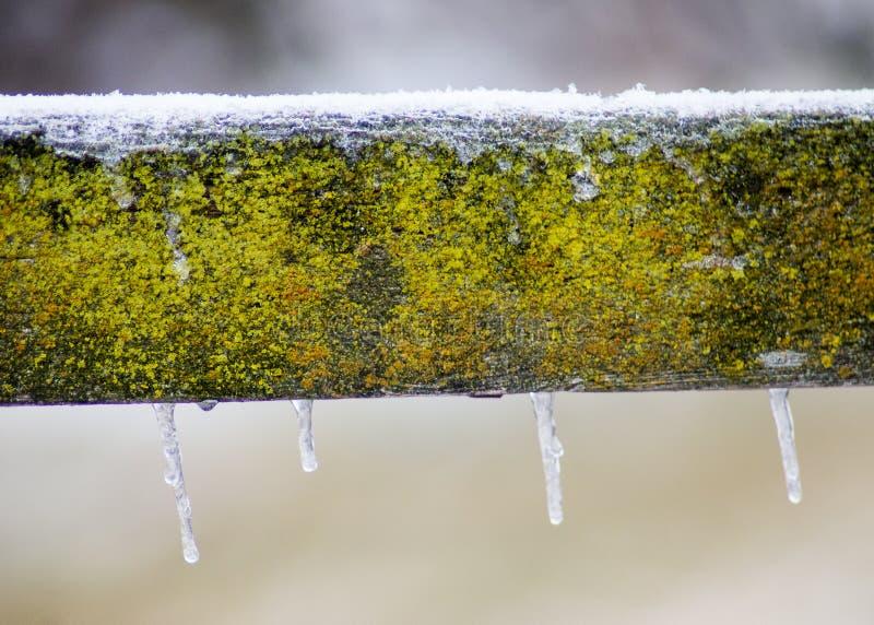 Cerca de madeira do celeiro velho coberta no musgo verde fotografia de stock royalty free