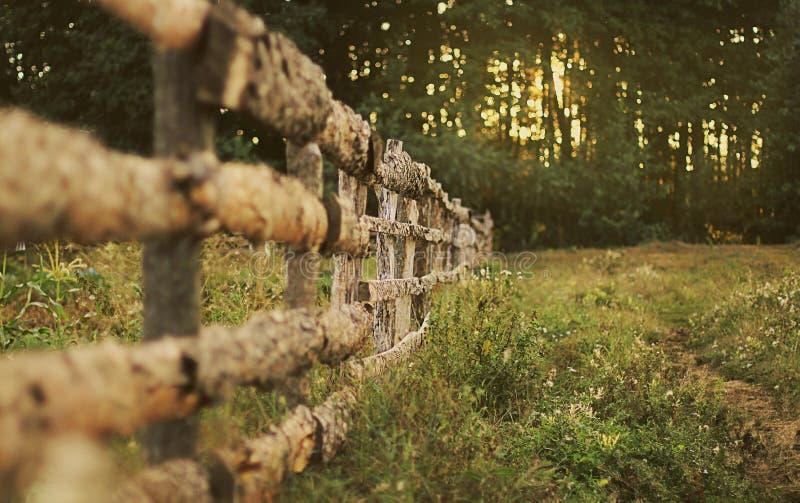 Cerca de madeira em uma opinião da floresta do campo imagem de stock