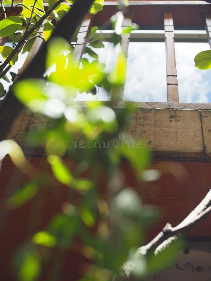 A cerca de madeira local tailandesa velha do balcão, janela de vidro, reflexão do céu, borrou as folhas verdes imagens de stock