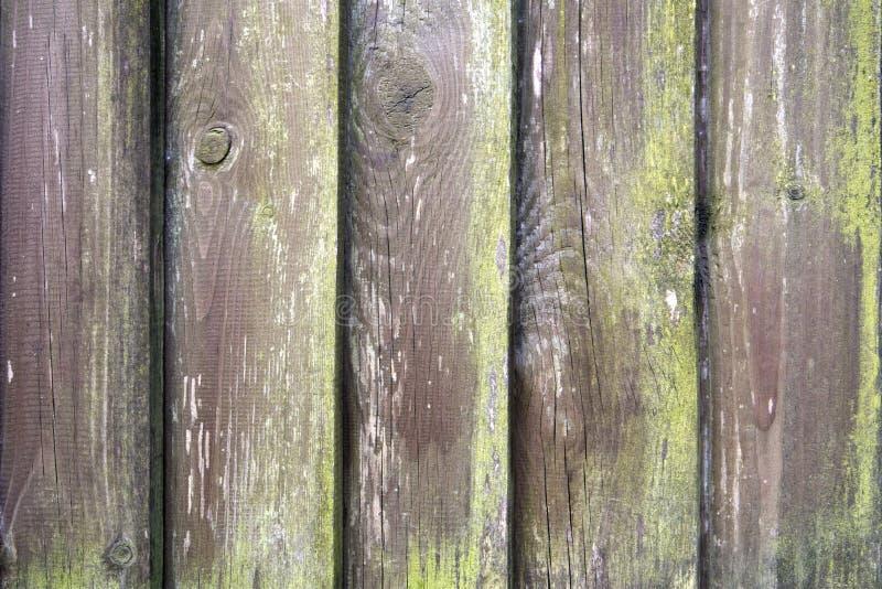 Cerca de madeira moldada velha coberto de vegetação com o musgo verde fotos de stock royalty free