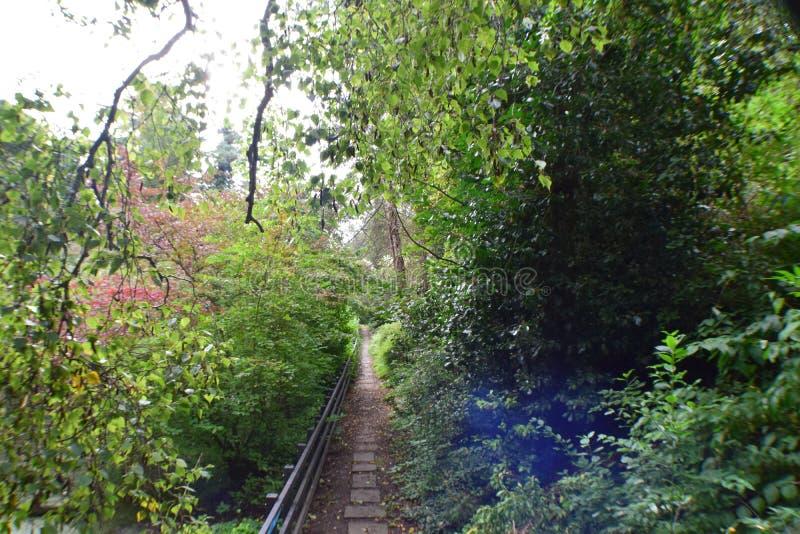 Cerca de madeira Path In Forest imagem de stock