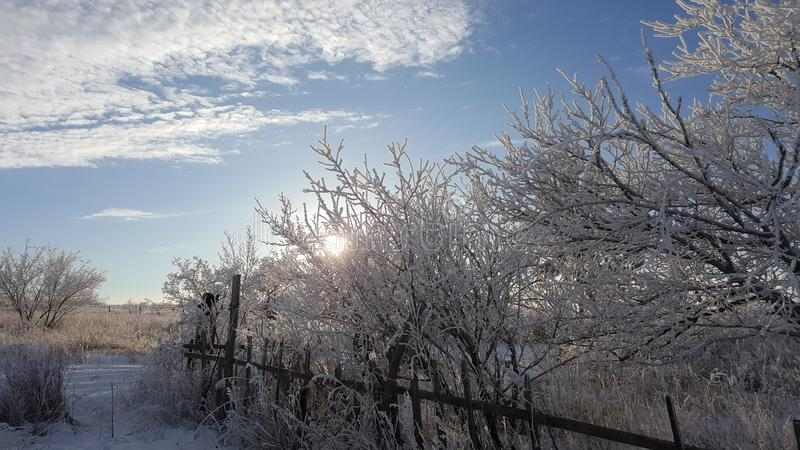 Cerca de madera hermosa en invierno Tablones cubiertos con nieve Contra el contexto de los arbustos y de los árboles derramados c imágenes de archivo libres de regalías
