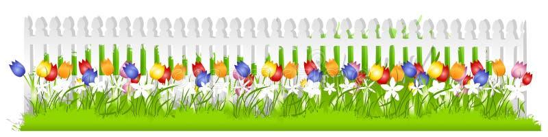 Cerca de piquete branca dos Tulips da fileira ilustração royalty free