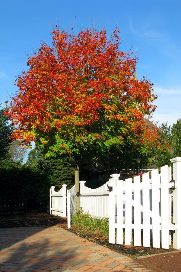 Cerca de piquete del árbol del color de la caída foto de archivo libre de regalías