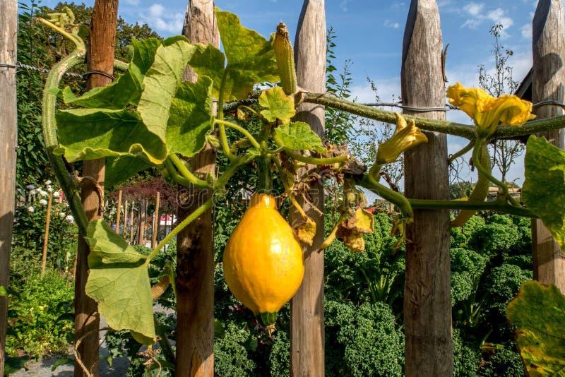 Cerca de piquete histórica velha em um jardim pequeno da exploração agrícola fotografia de stock royalty free