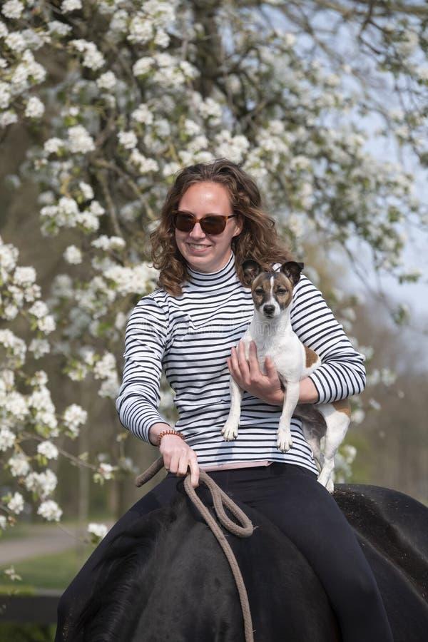 Cerca de una chica en un caballo marrón preñado sin montura, tiene un perro pequeño en el brazo, flor blanca foto de archivo