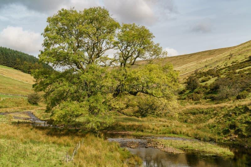 Cerca del depósito de Cantref, Powys, País de Gales, Reino Unido imágenes de archivo libres de regalías