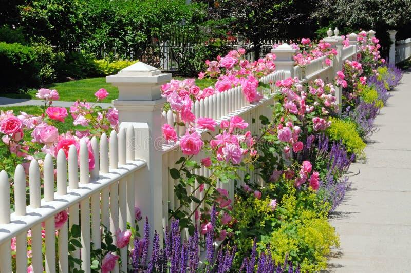 Cerca del jardín con las rosas rosadas foto de archivo