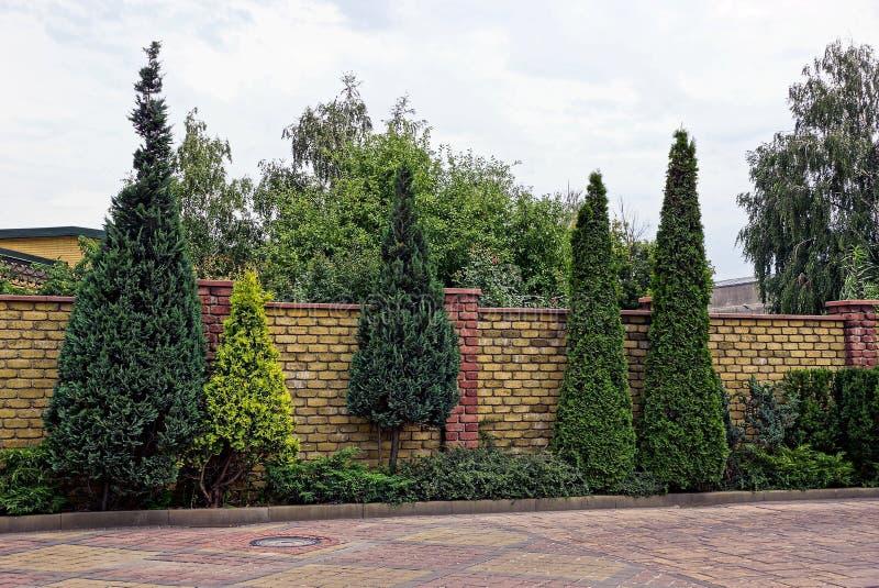 Cerca del ladrillo y árboles decorativos verdes coníferos en la calle foto de archivo libre de regalías