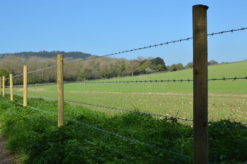 Cerca do arame farpado ao longo do campo da colheita fotografia de stock royalty free