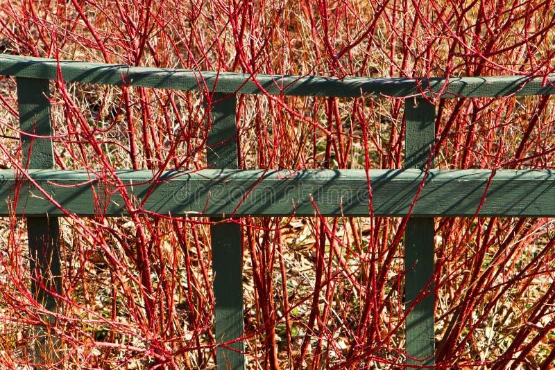 Cerca do jardim e dogwood do vermelho-galho fotografia de stock royalty free