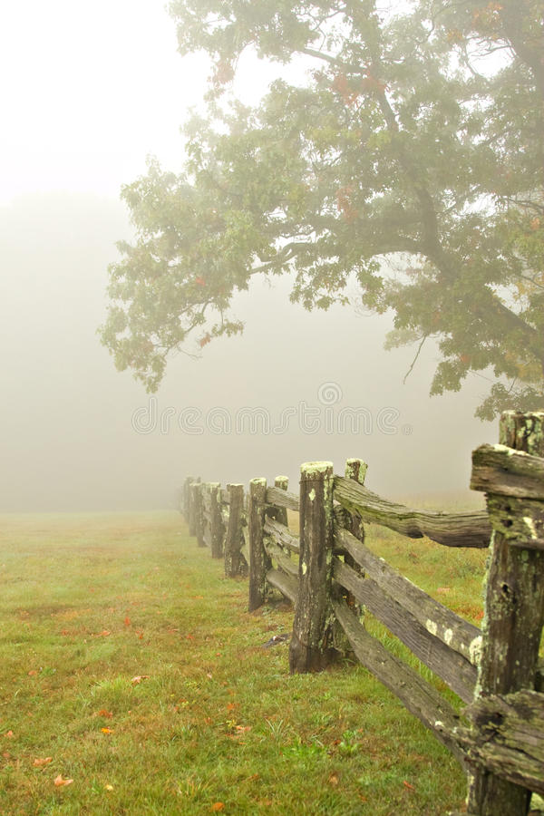 Cerca e árvores na névoa fotografia de stock
