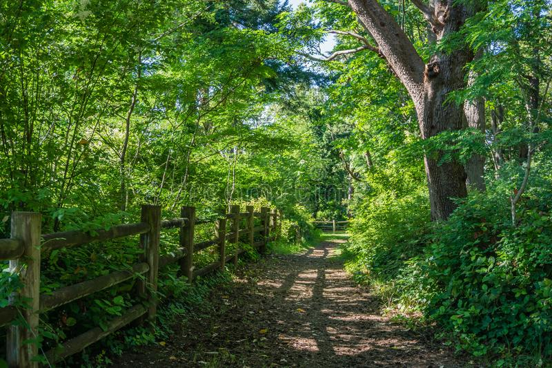 Cerca e trajeto de madeira foto de stock royalty free