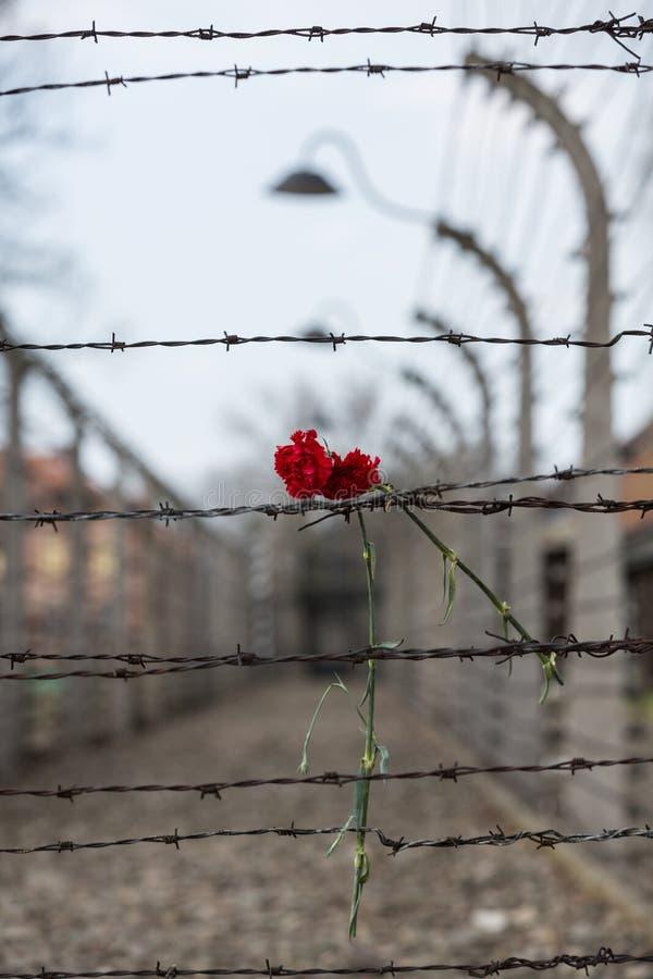 Cerca eléctrica en el campo de concentración nazi anterior Auschwitz I, foto de archivo libre de regalías