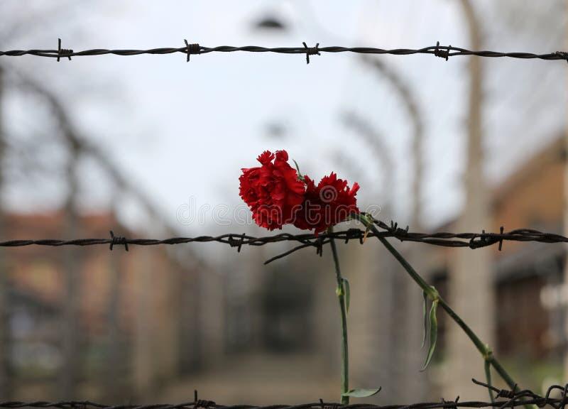 Cerca eléctrica en el campo de concentración nazi anterior Auschwitz I imágenes de archivo libres de regalías