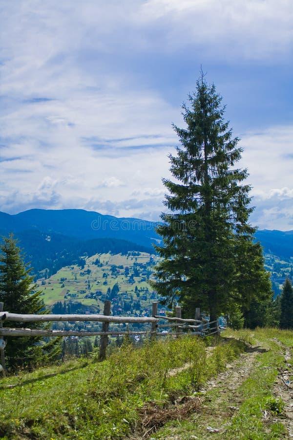 Download Cerca na floresta imagem de stock. Imagem de curva, construção - 26521525