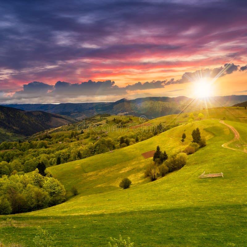 Cerca no prado do montanhês no por do sol imagens de stock