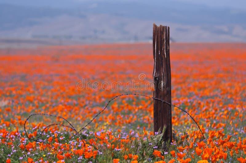 Cerca quebrada e flores selvagens fotografia de stock
