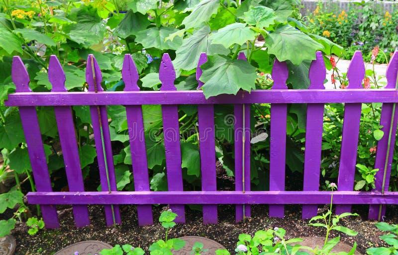 Cerca roxa do jardim imagens de stock
