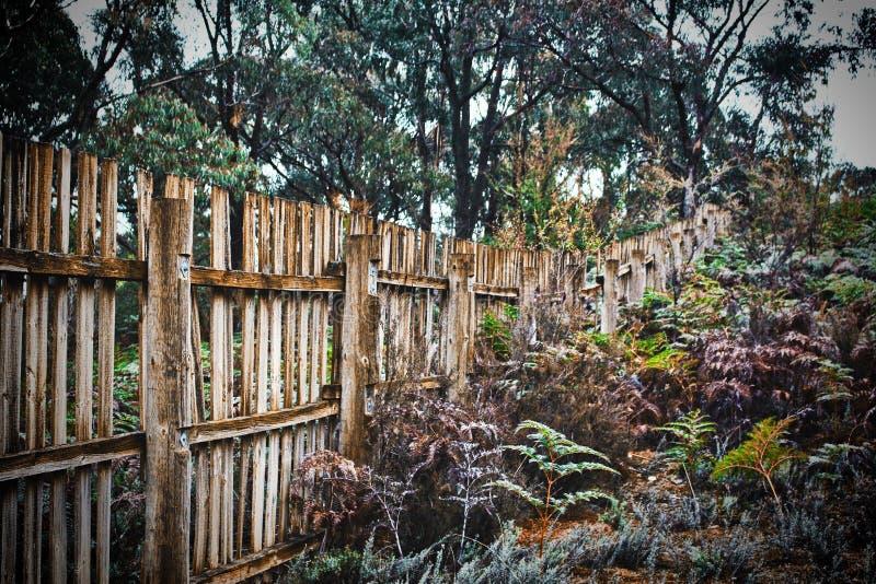 Cerca vieja en el arbusto australiano fotografía de archivo