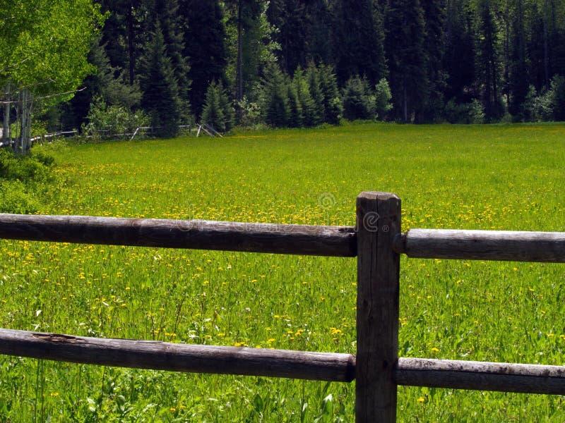 Cerca y campo de Wildflowers amarillos fotografía de archivo